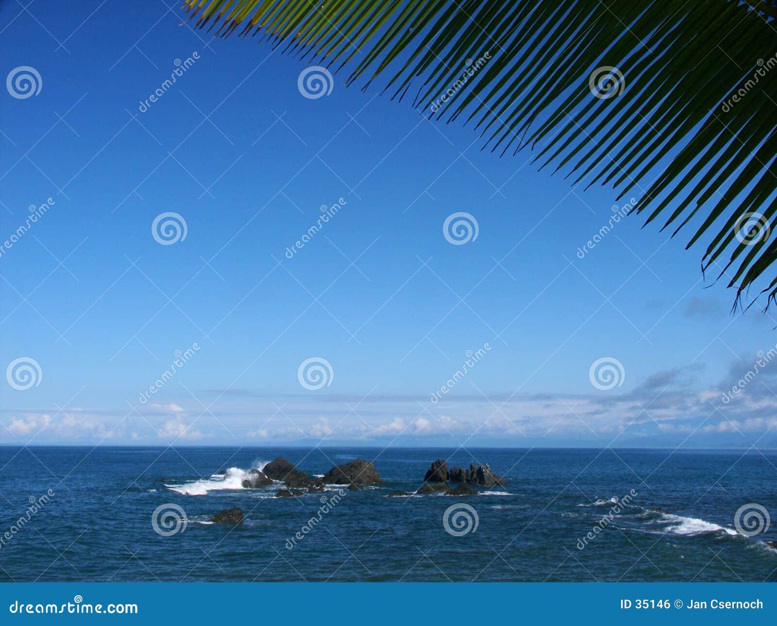 Palmtree leaf with seaview and rocks