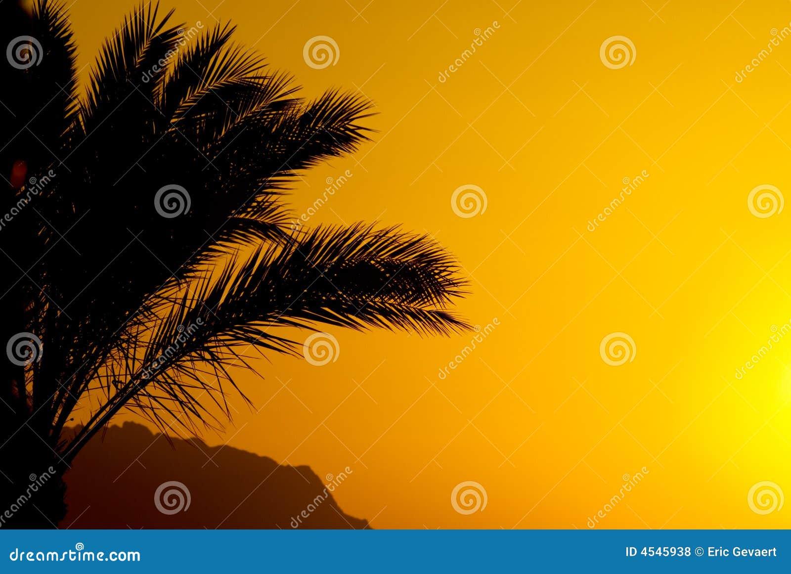 Palmtree und Sonnenuntergang
