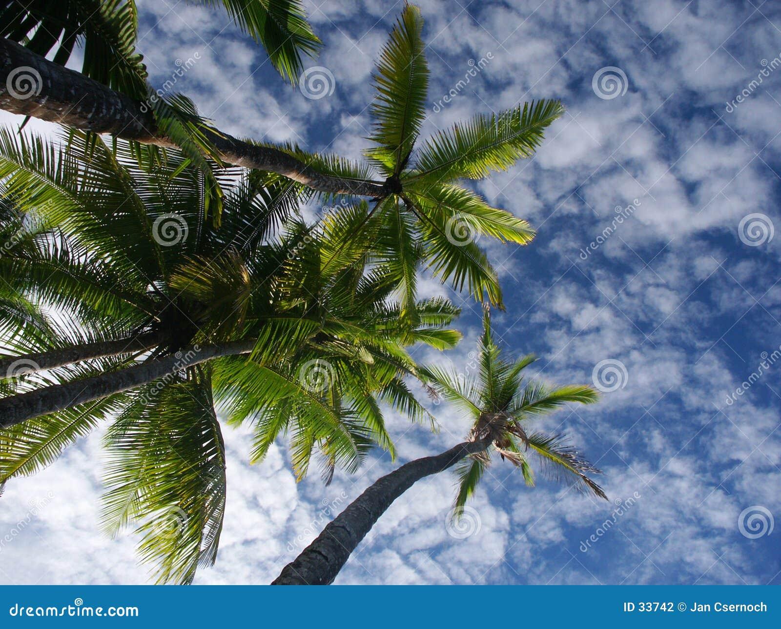 Palmtrees niebo