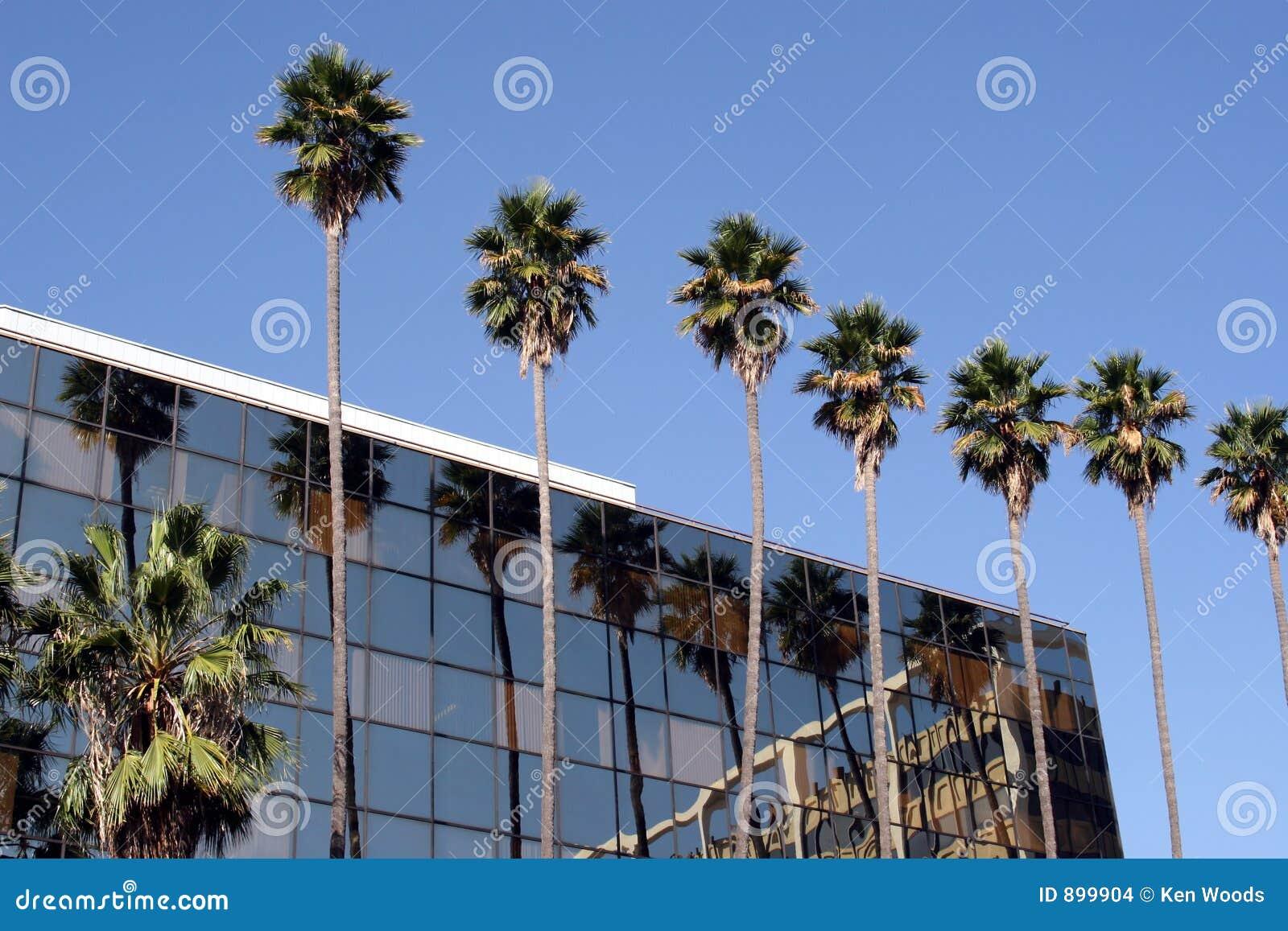 Palmy budynków