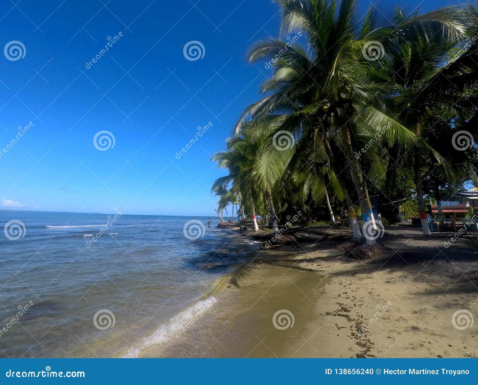 Palmy drzewo w Puerto Viejo plaży, Costa Rica