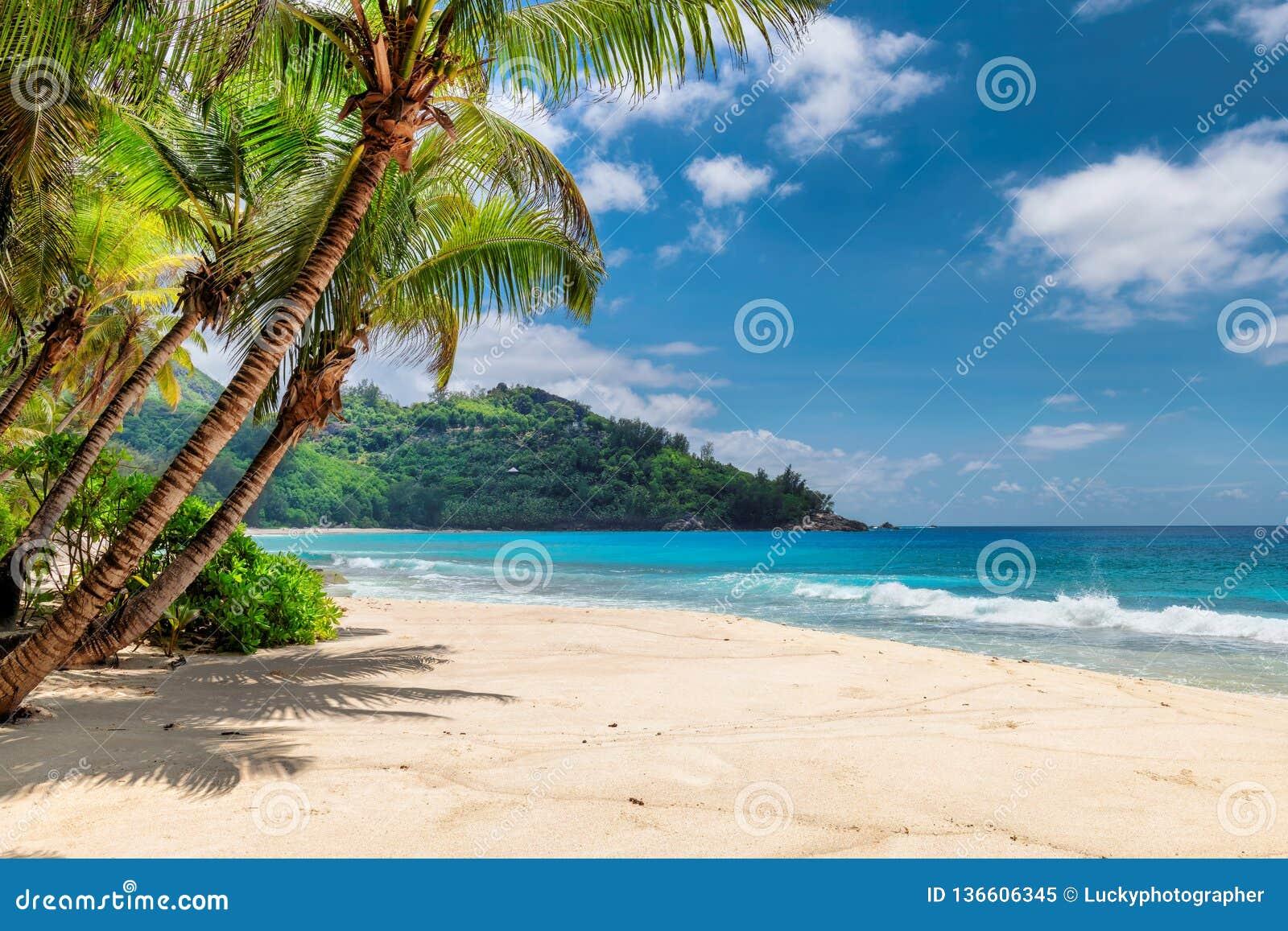 Palmy i tropikalna plaża z białym piaskiem