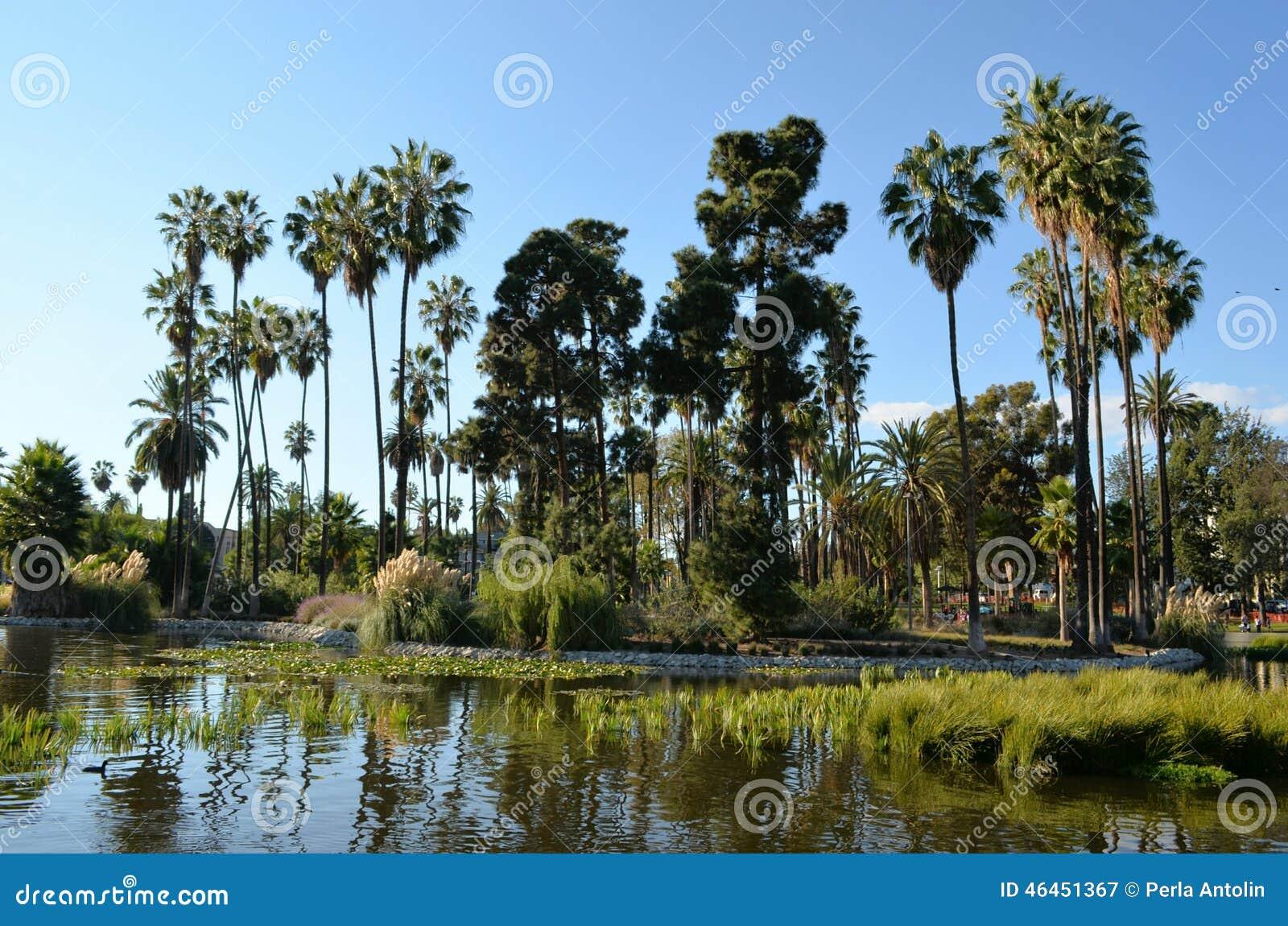 Palmy Kształtują teren na jeziorze