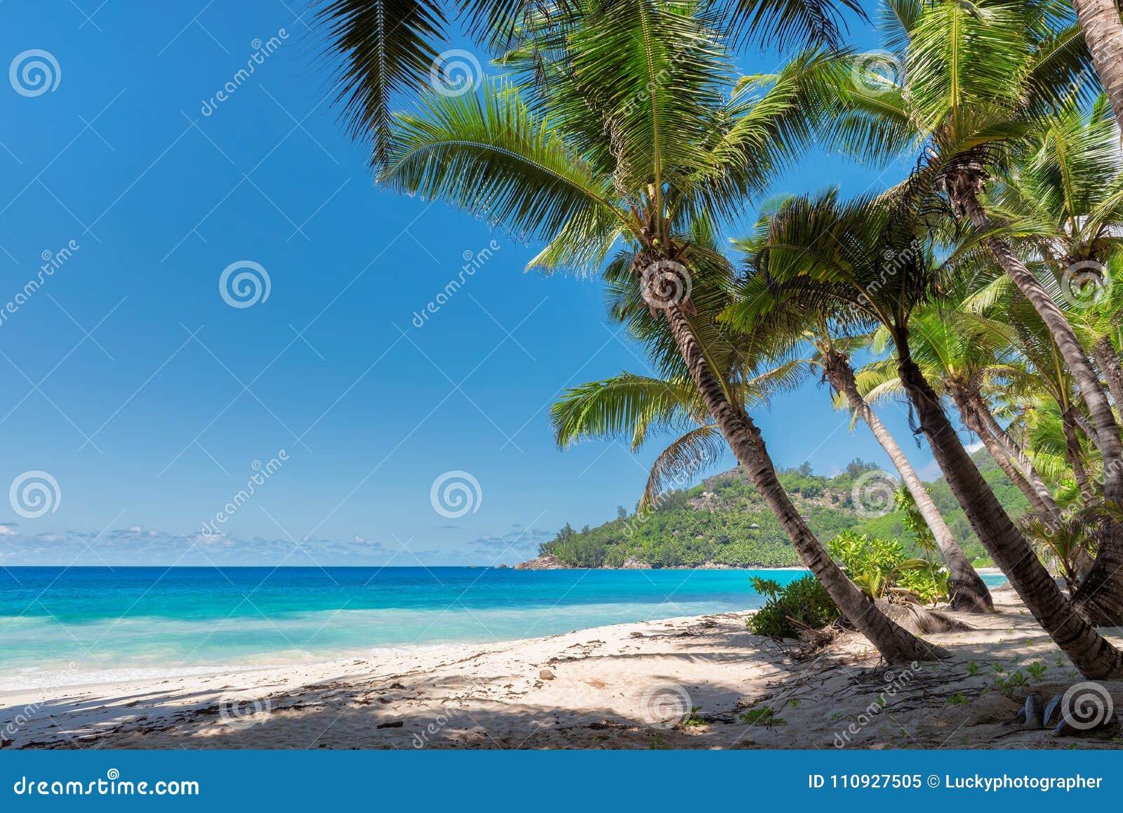 Palmy na pięknej Seychelles plaży