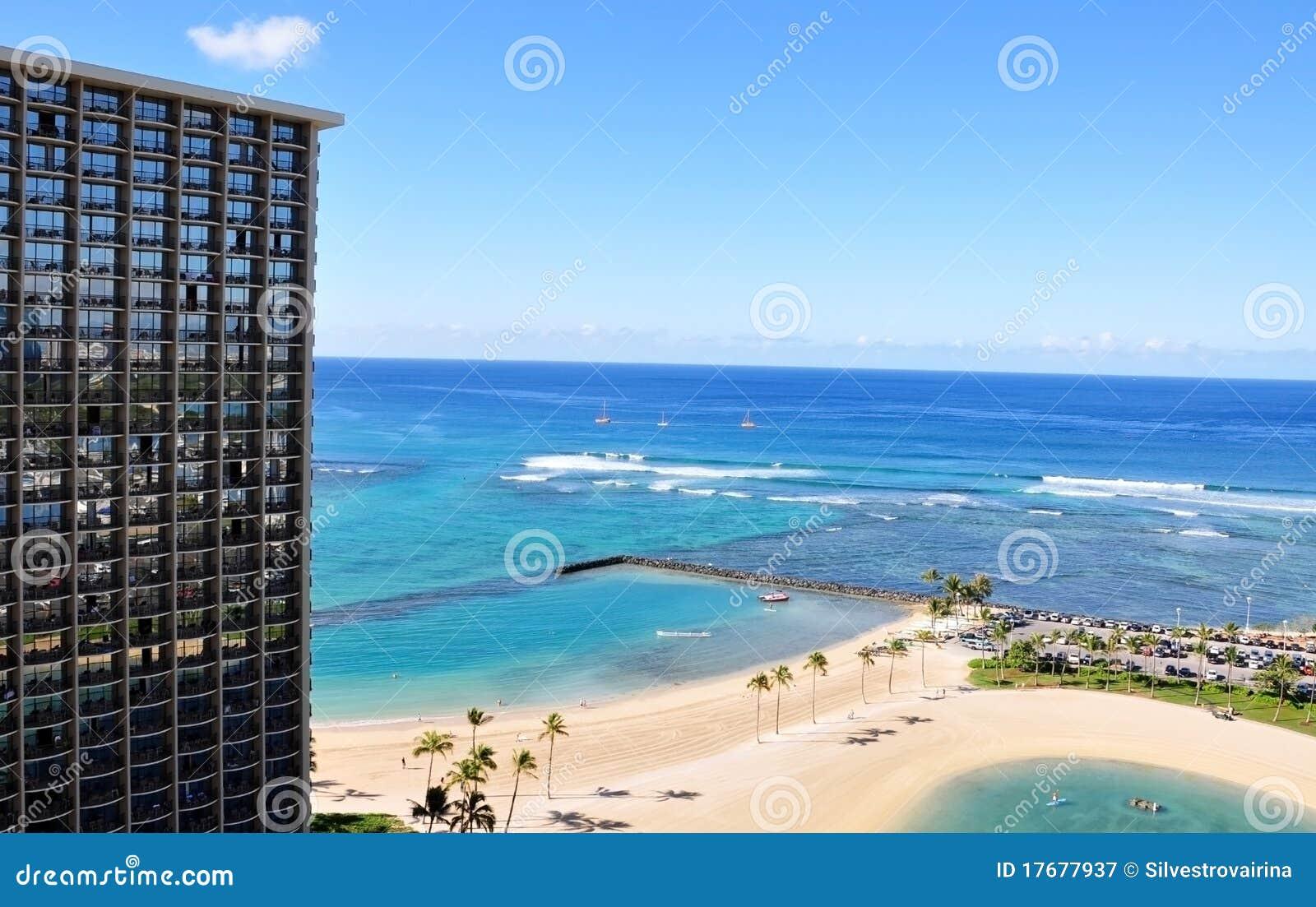 Palmy plażowy waikiki