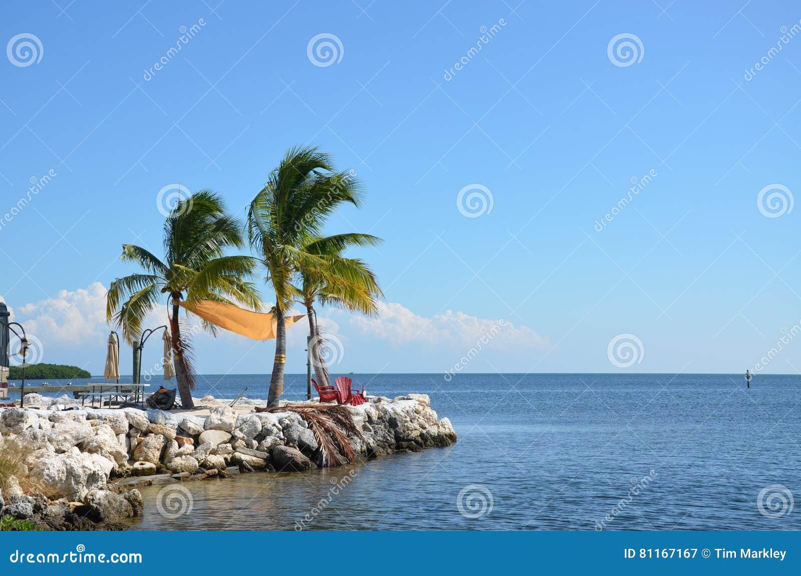 Palmy w wiatrze