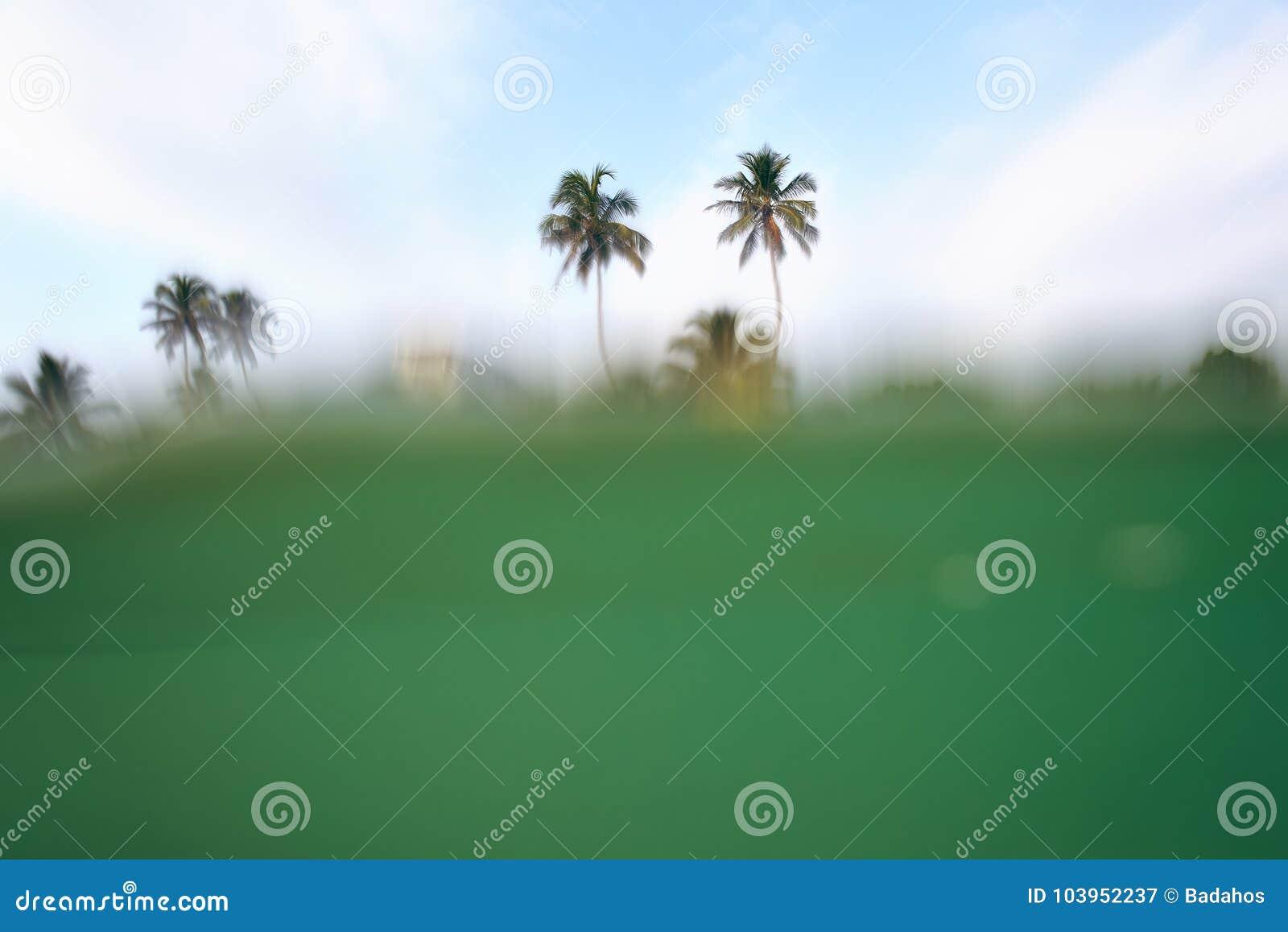 Palmy w wodzie