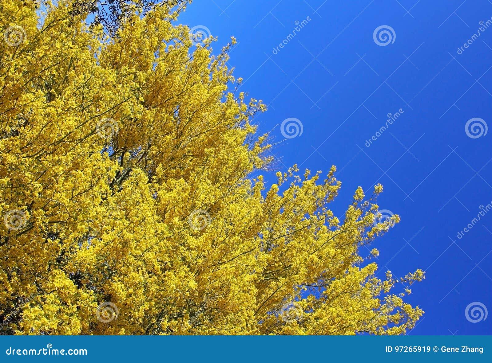 Palo Verde Arizona State Tree Stock Image Image Of Flowers