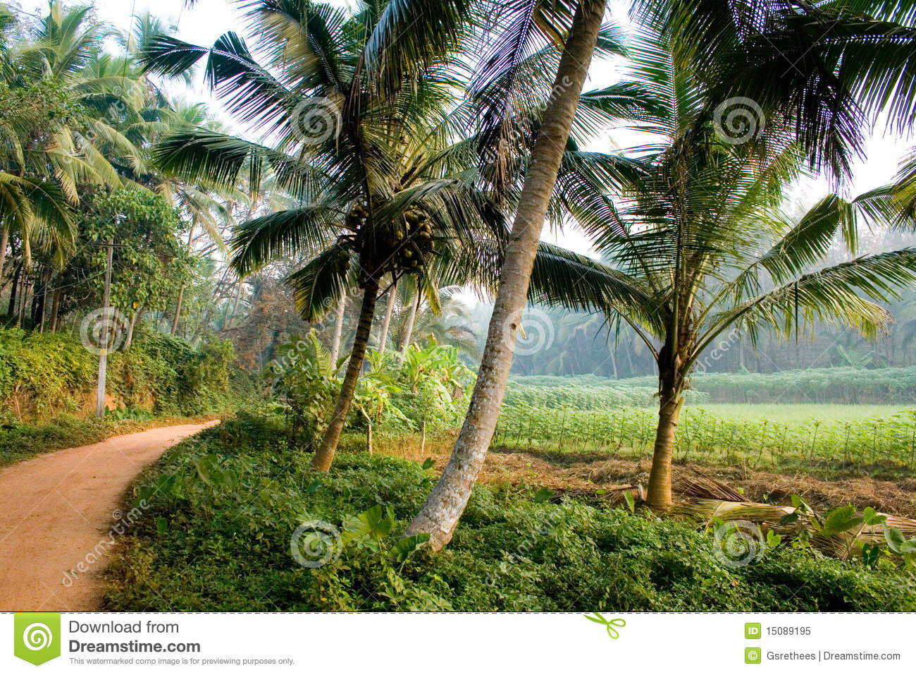 Palode Agriculture Field In Kerala Royalty Free Stock ...