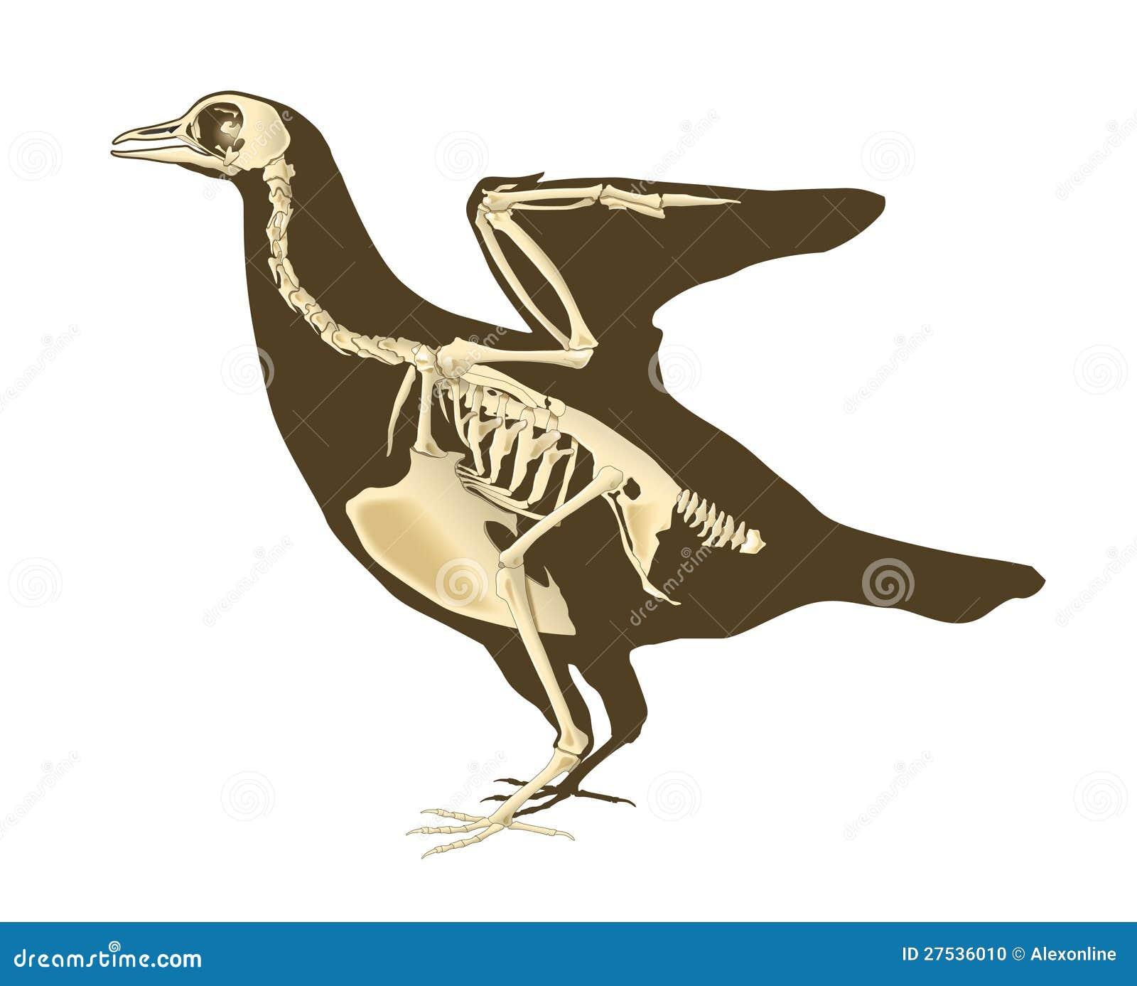 Paloma ilustración del vector. Ilustración de vuelo, estudio - 27536010