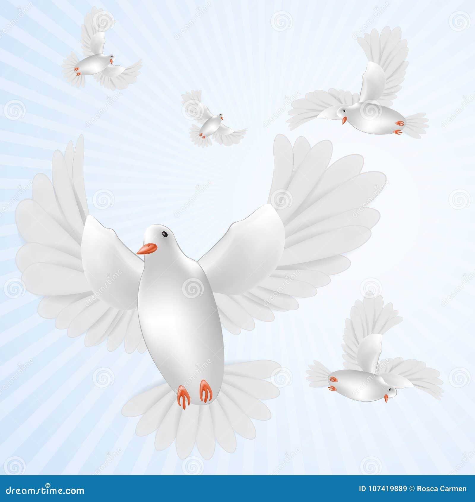 Paloma blanca aislada