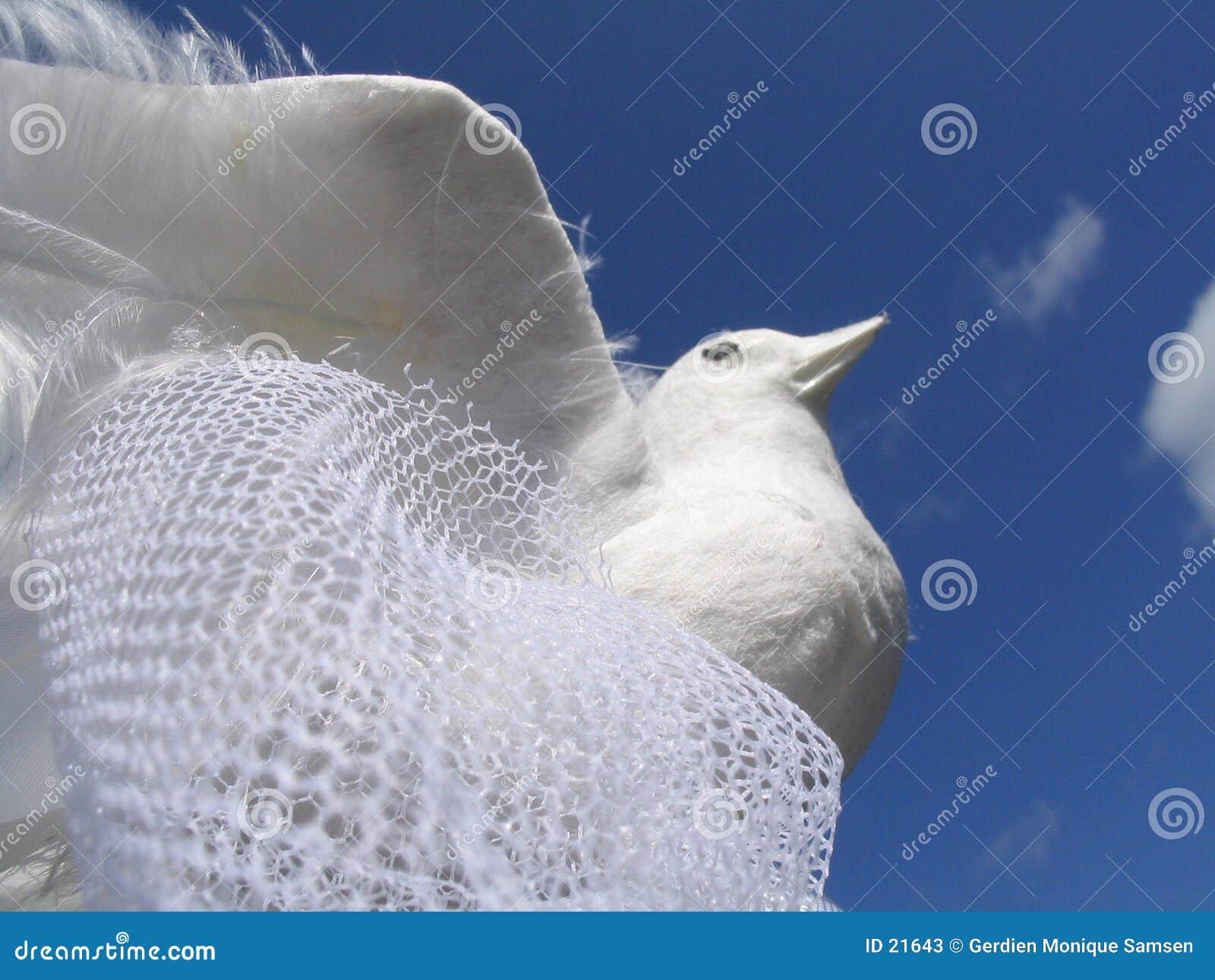 Paloma blanca de la boda