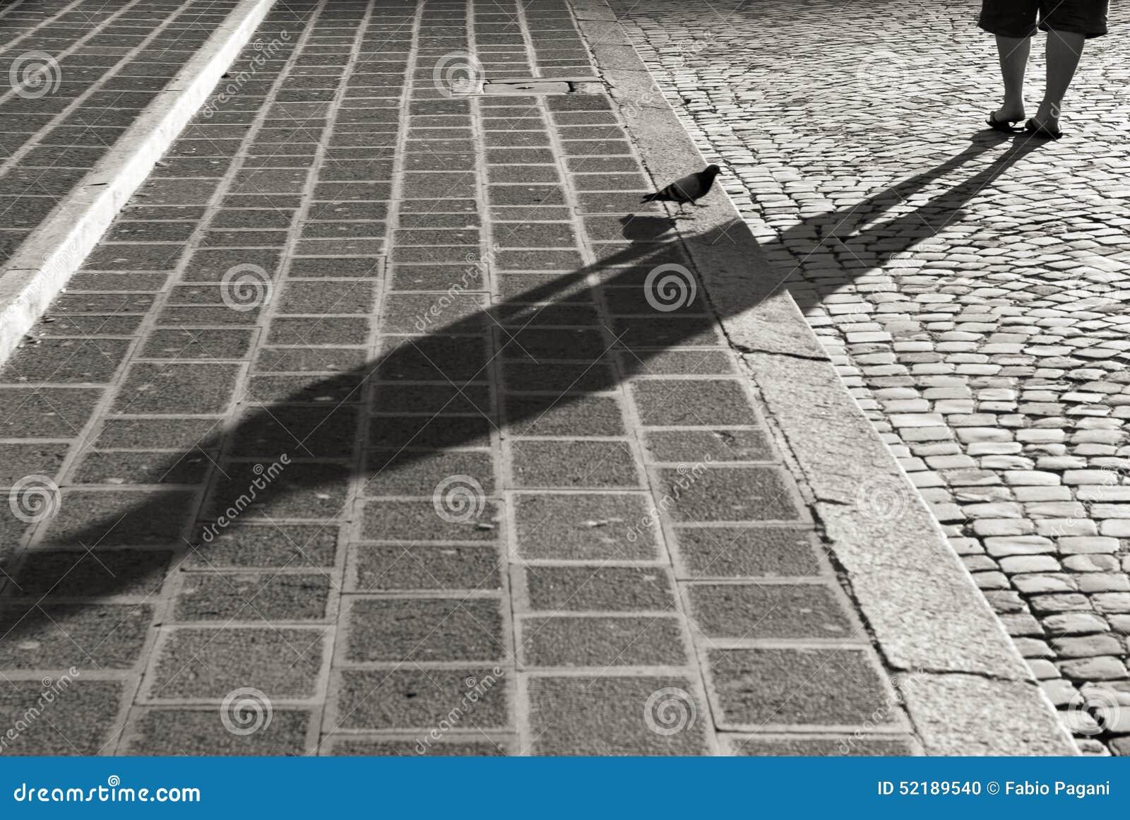 Paloma en las escaleras del guijarro en Roma, blanco y negro