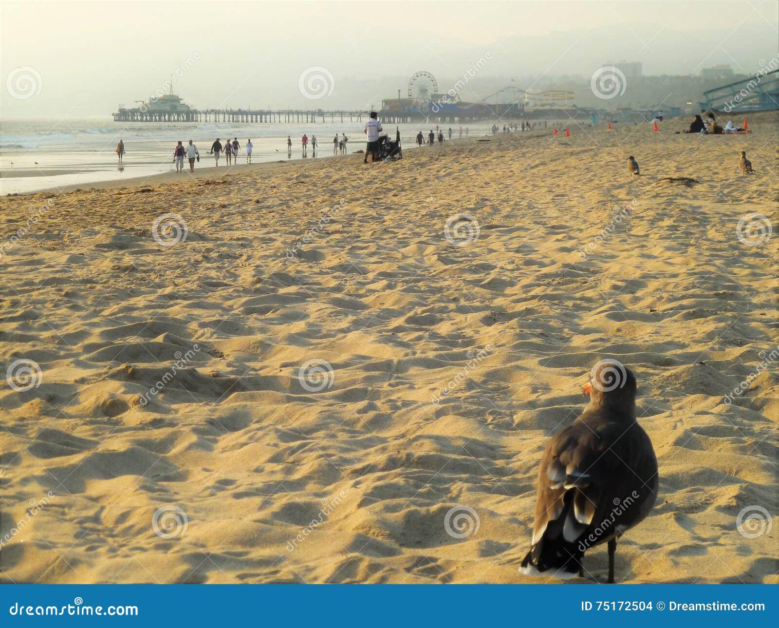 Paloma en una playa del mar