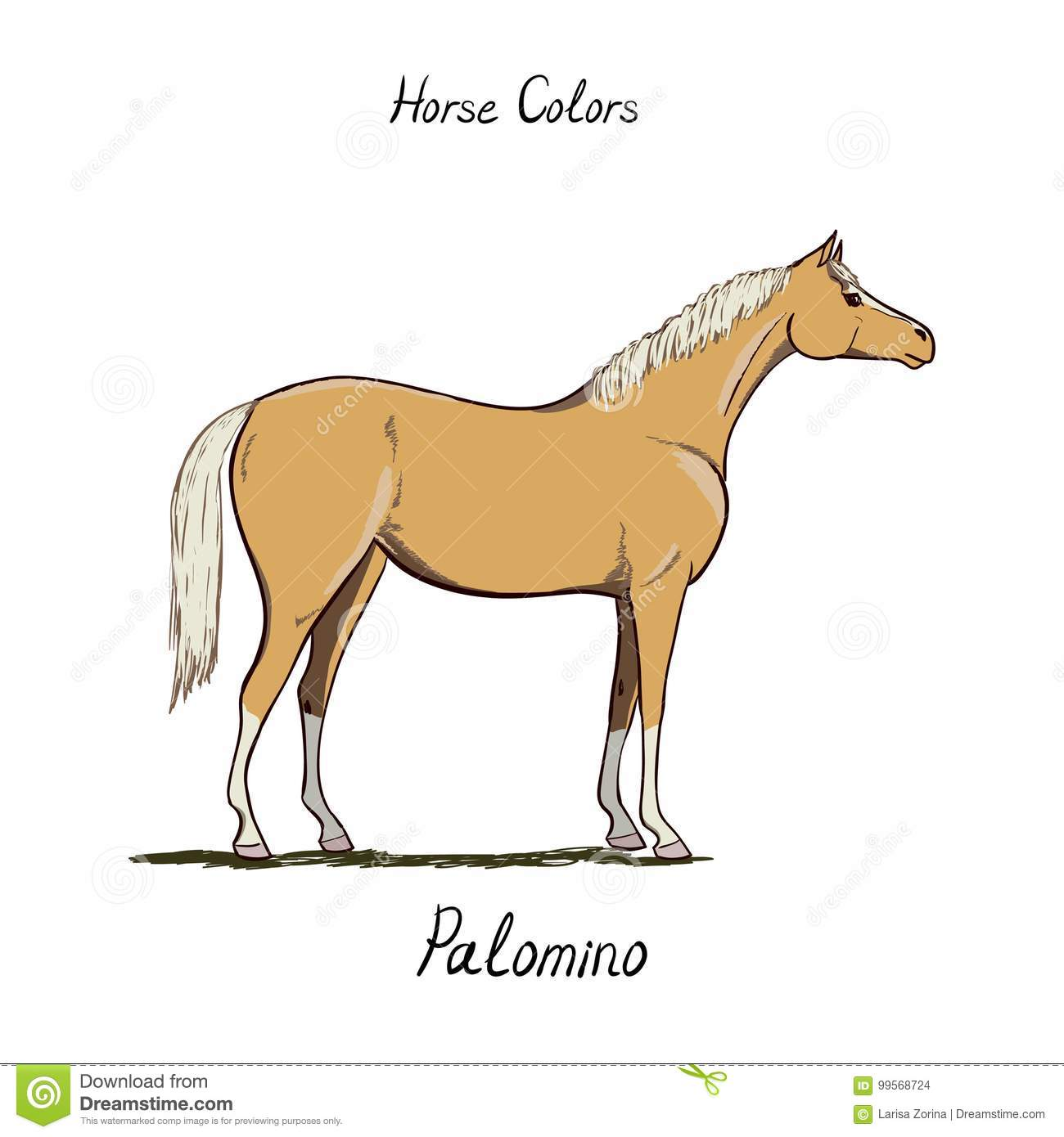 Horse Color Chart On White. Equine Coat Colors With Text ...