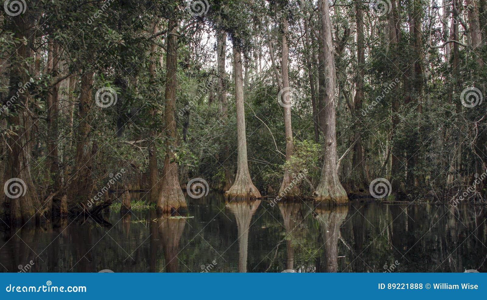 Palude scura di cypress di stagno barba dei frati for Tartaruga di palude