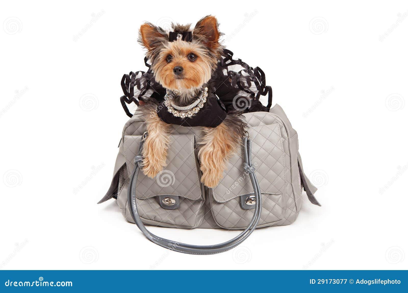 Pampered Dog In Designer Travel Bag Royalty Free Stock