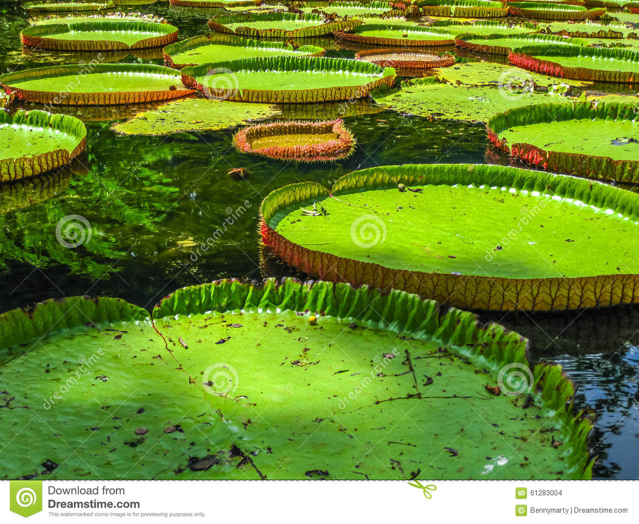 Pamplemousses mauritius stock photo image 61283004 for What time does the botanical gardens close