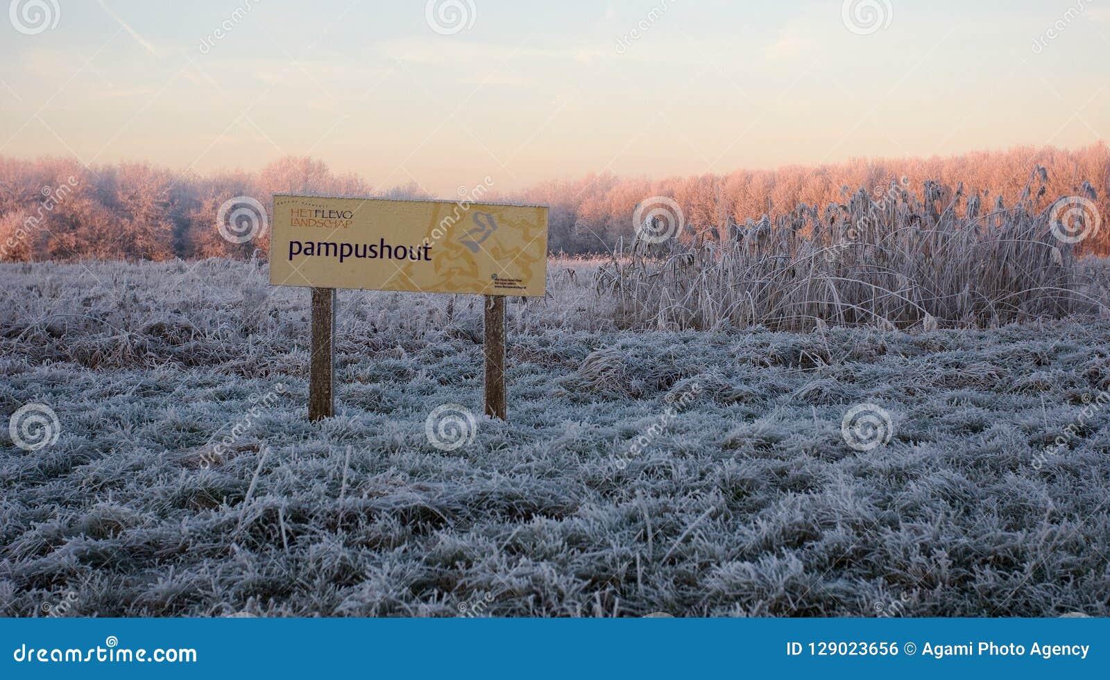 Pampushout Almere holandie zakrywać w sadzi, Pampushout