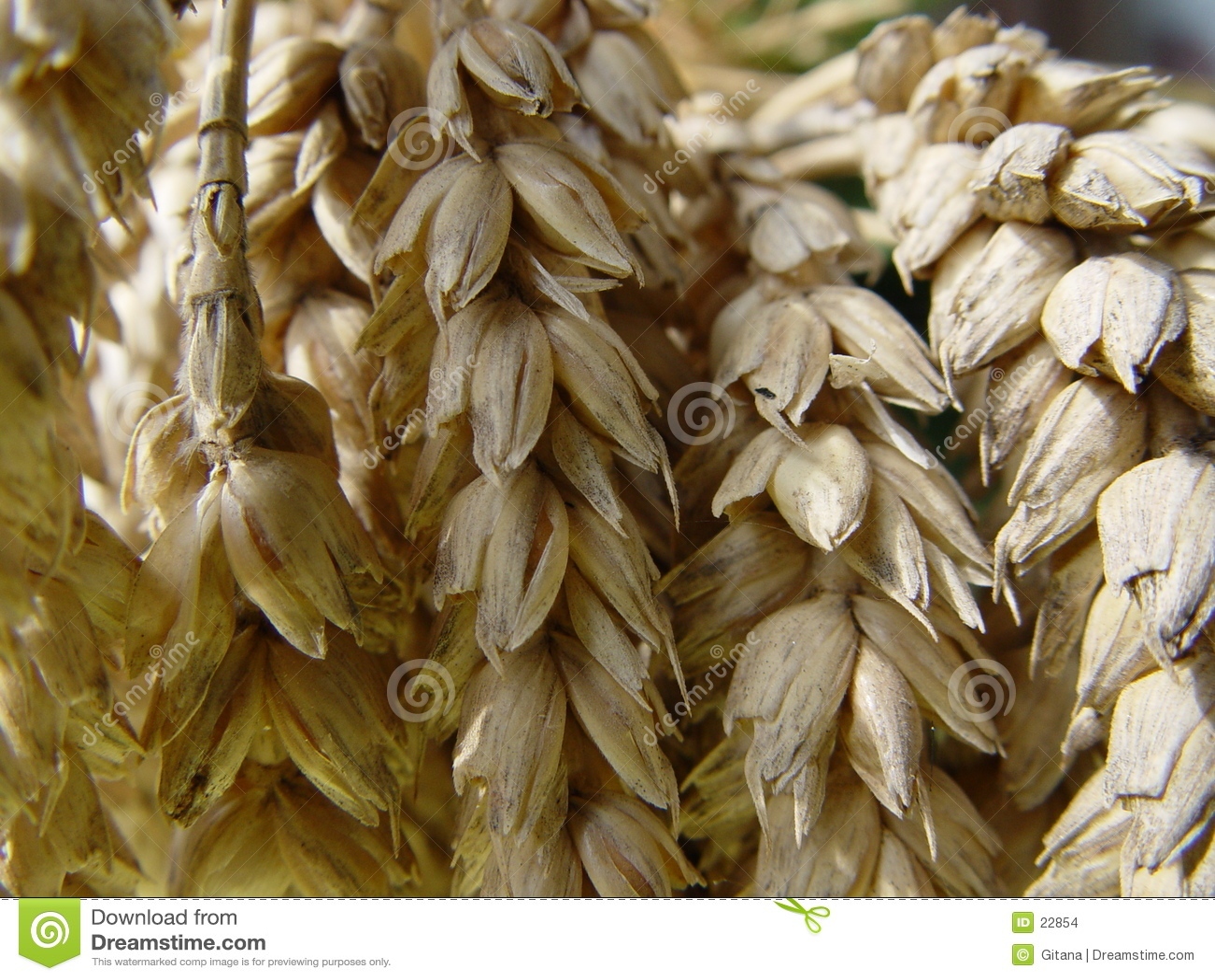 Pan del trigo