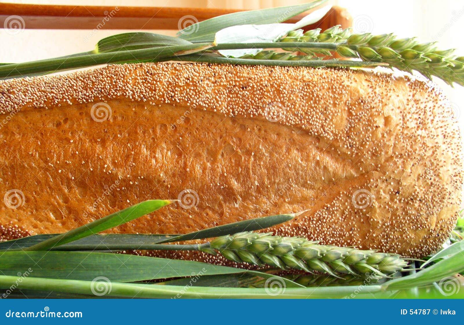 Pan y wheaties