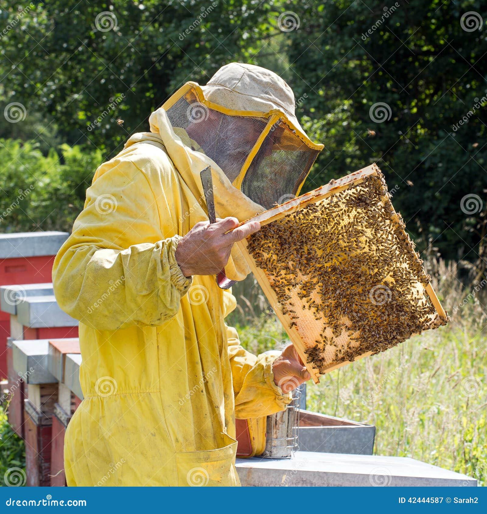 Panal retroiluminado con las abejas Apicultura, cosecha cuadrada