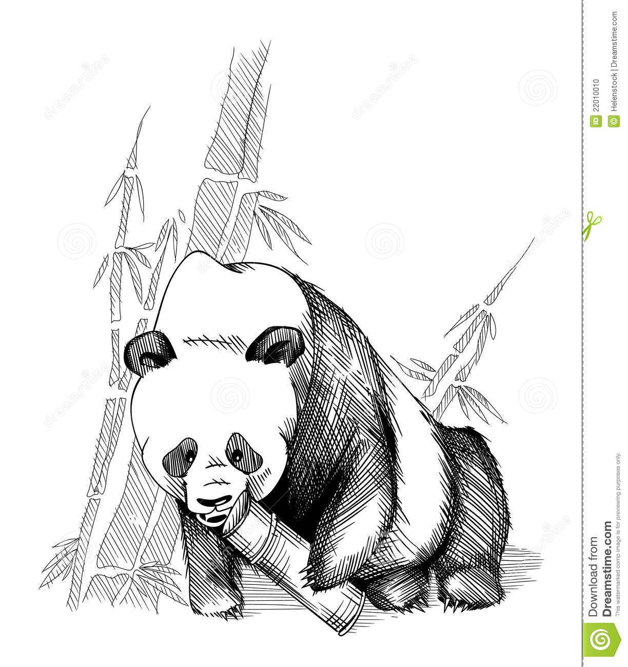 Panda And Bamboo Stock Photo Image 22010010