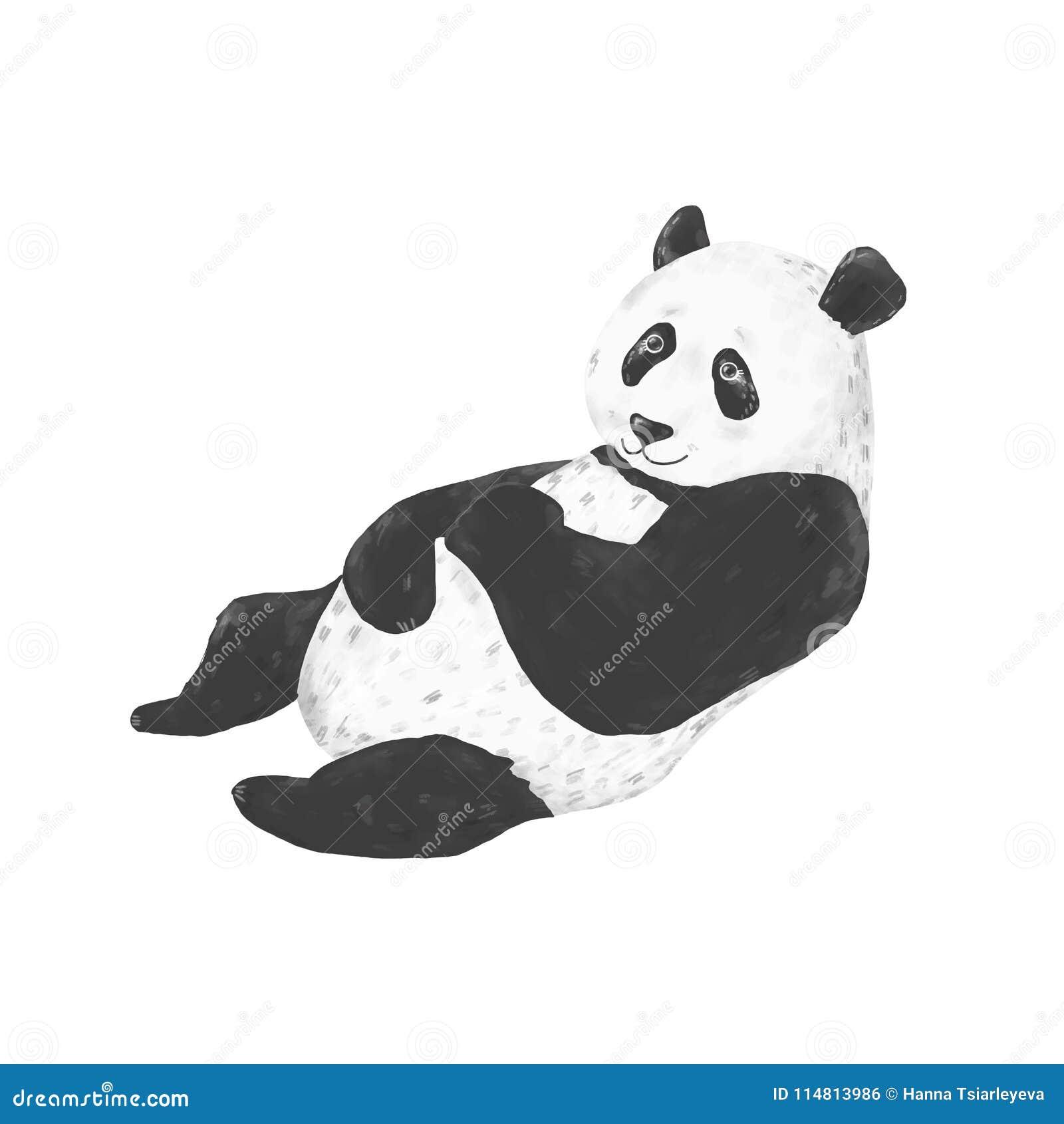 Panda Clip Art Drawing Animal Illustration On White Background Cute