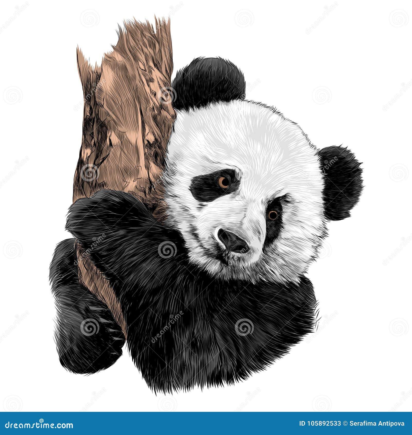 f51e58241c6 Panda Sketch Vector Graphics Stock Vector - Illustration of poster ...