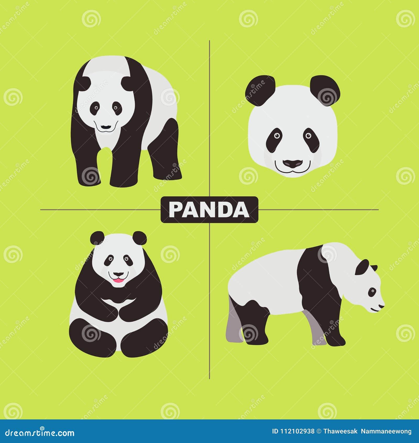 Panda Wildlife Chinese Animal