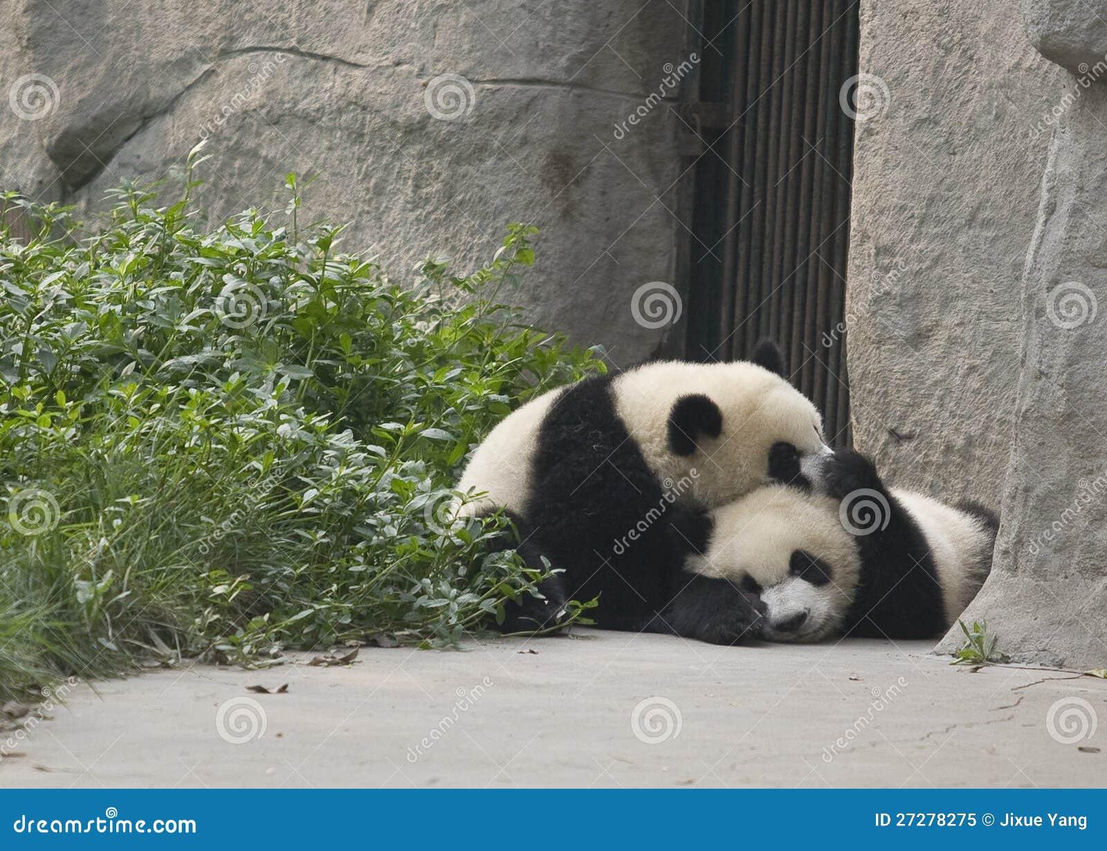 Pandagröngölingar