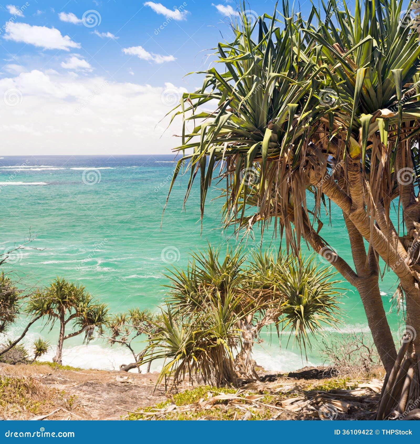 Palm Tree Island: Pandanus Palm Tree Stock Photo. Image Of Palm, Palms
