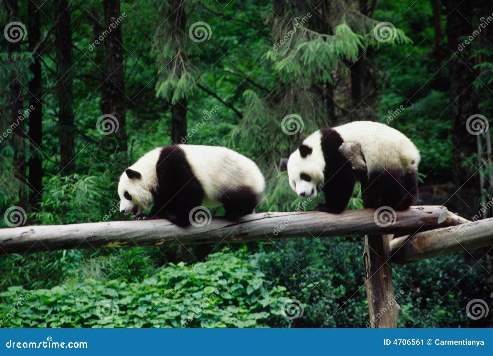 Pandas μωρών