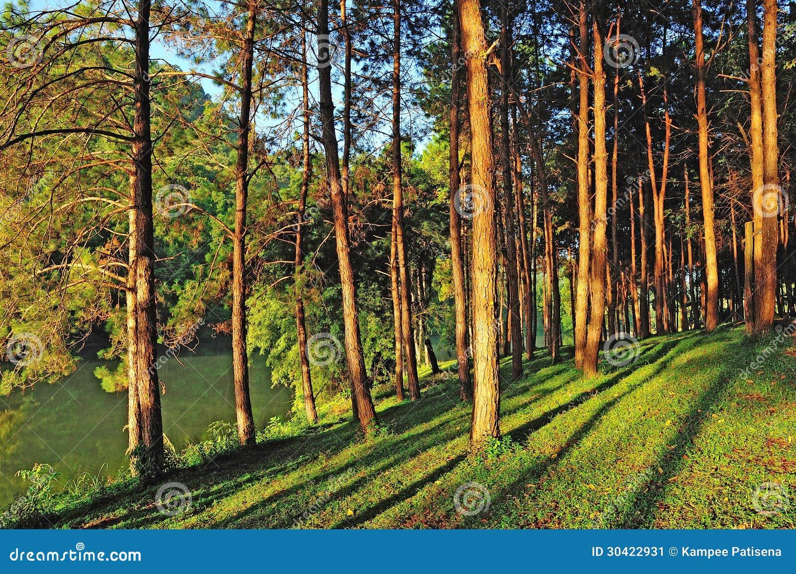 Pang Ung Forestry Plantations