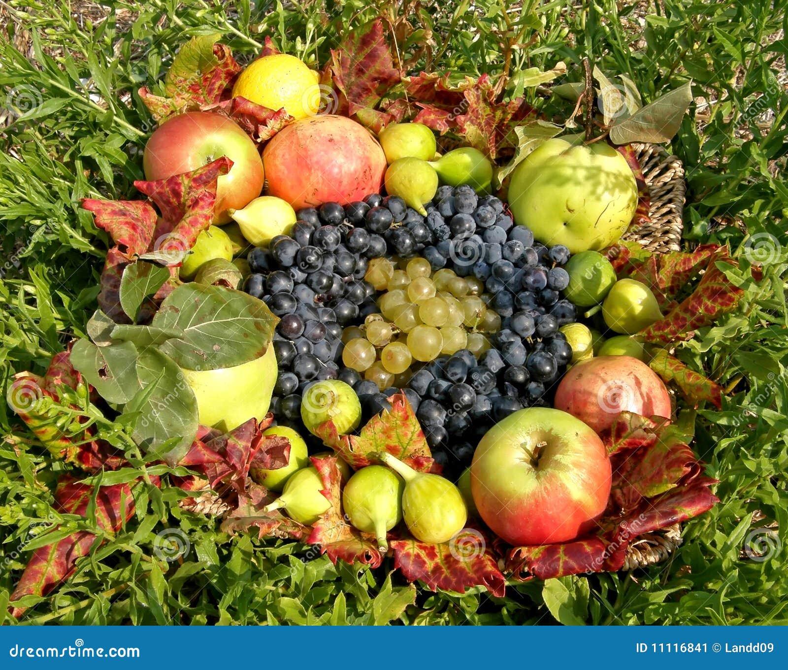 panier de fruit d 39 automne image stock image 11116841. Black Bedroom Furniture Sets. Home Design Ideas