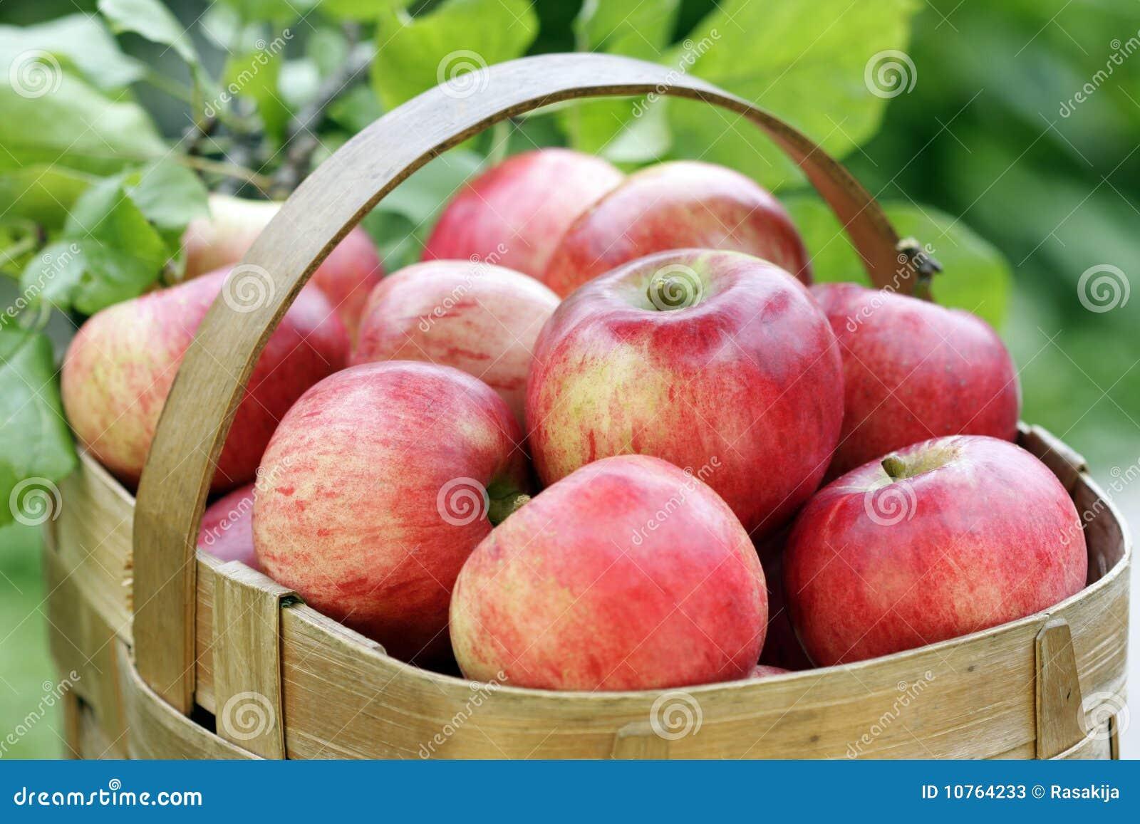 panier des pommes rouges photos stock image 10764233. Black Bedroom Furniture Sets. Home Design Ideas
