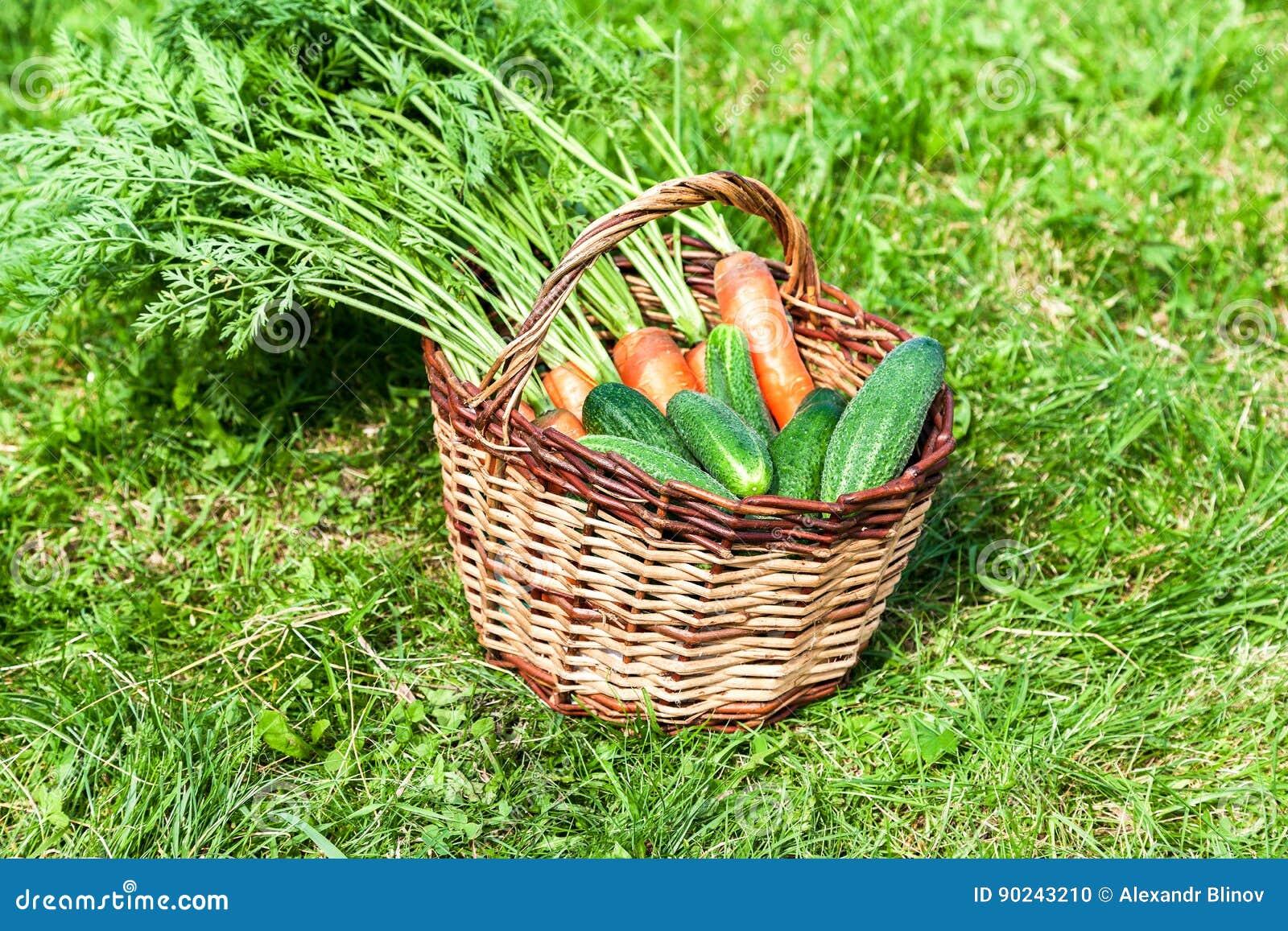 panier en osier en bois avec les carottes oranges fra ches et le cucumbe vert photo stock. Black Bedroom Furniture Sets. Home Design Ideas