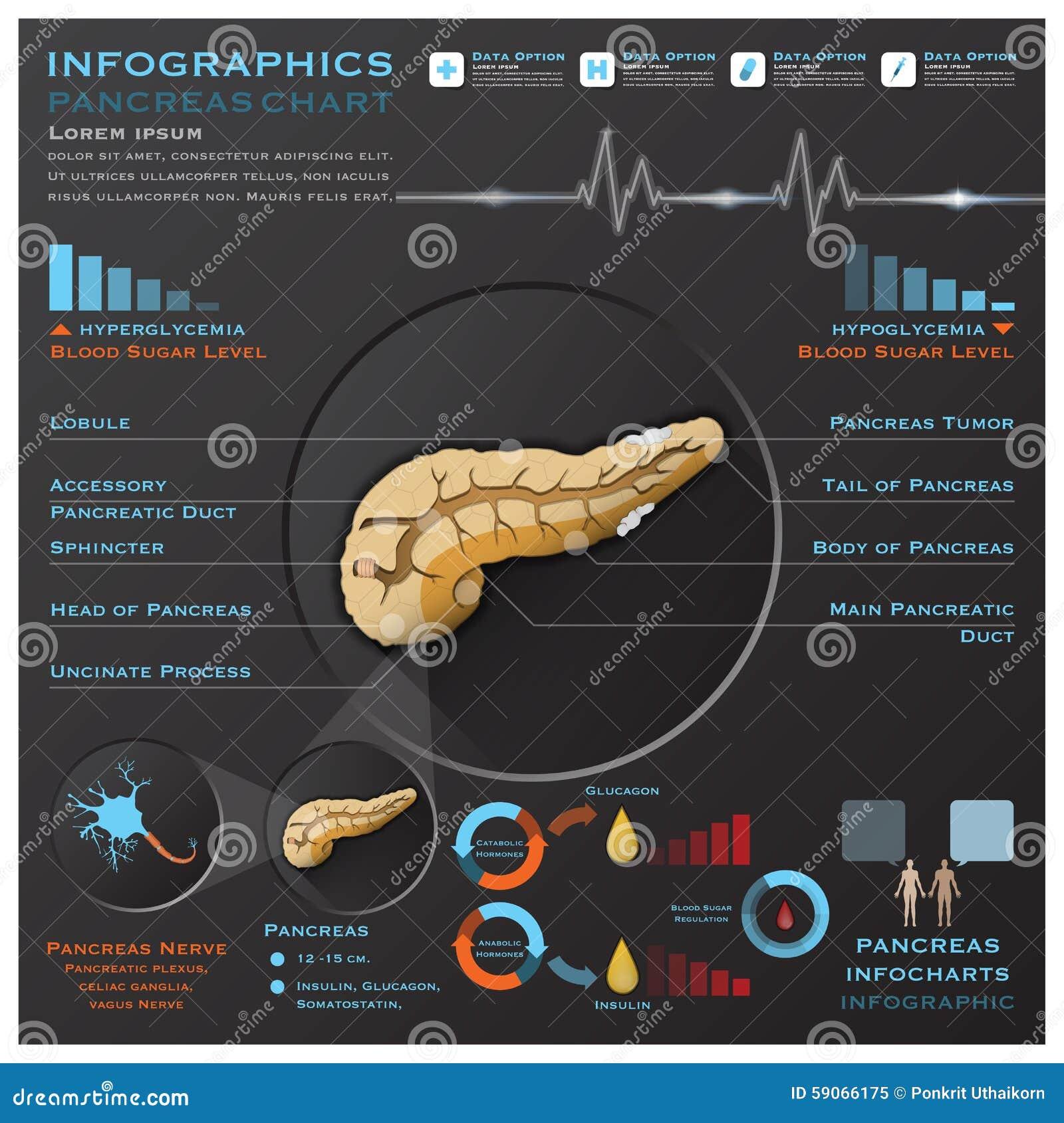 Pankreas-Anatomie-System Medizinisches Infographic Infochart Vektor ...