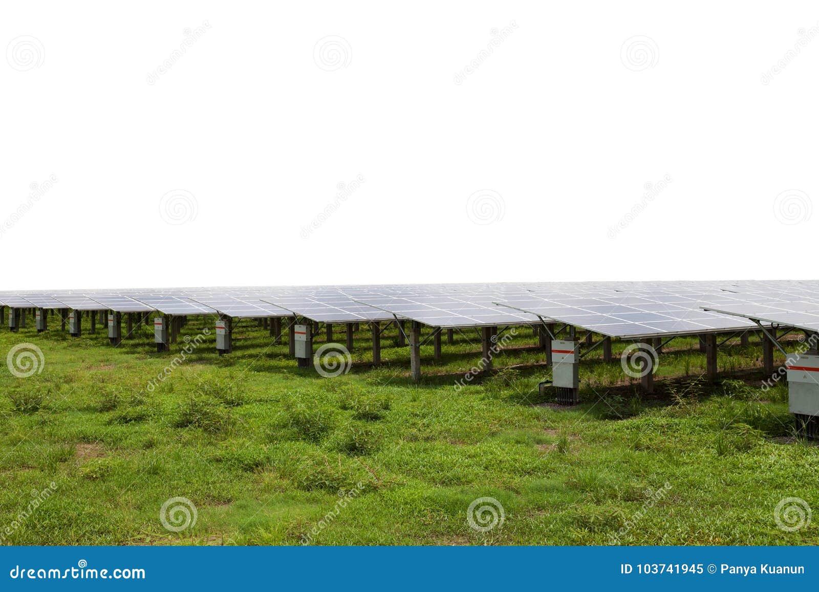 Panneaux solaires dans les fermes solaires sur le fond blanc