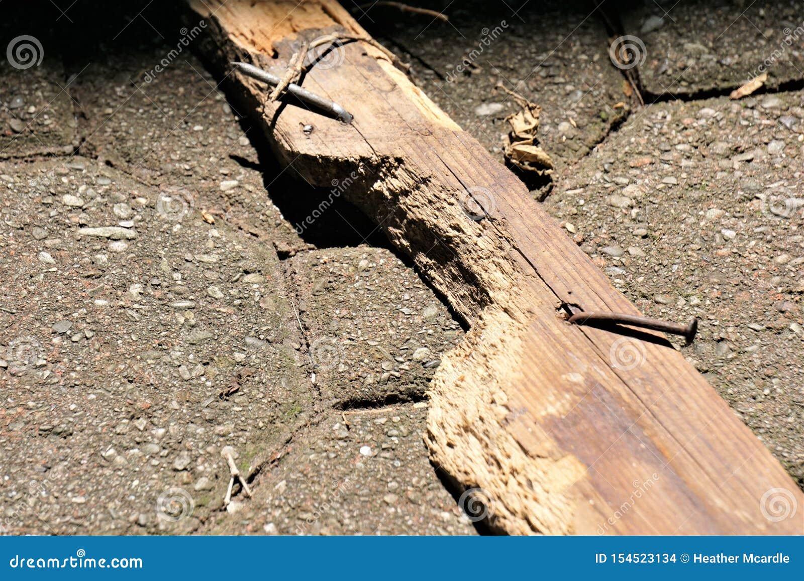 Pannello segnaletico nocivo dagli scoiattoli