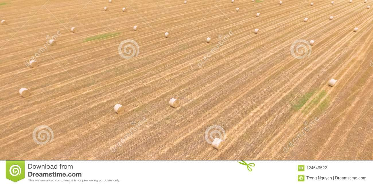 Panoramic top view bale hays on corn farm after harvest in Austin, Texas, US