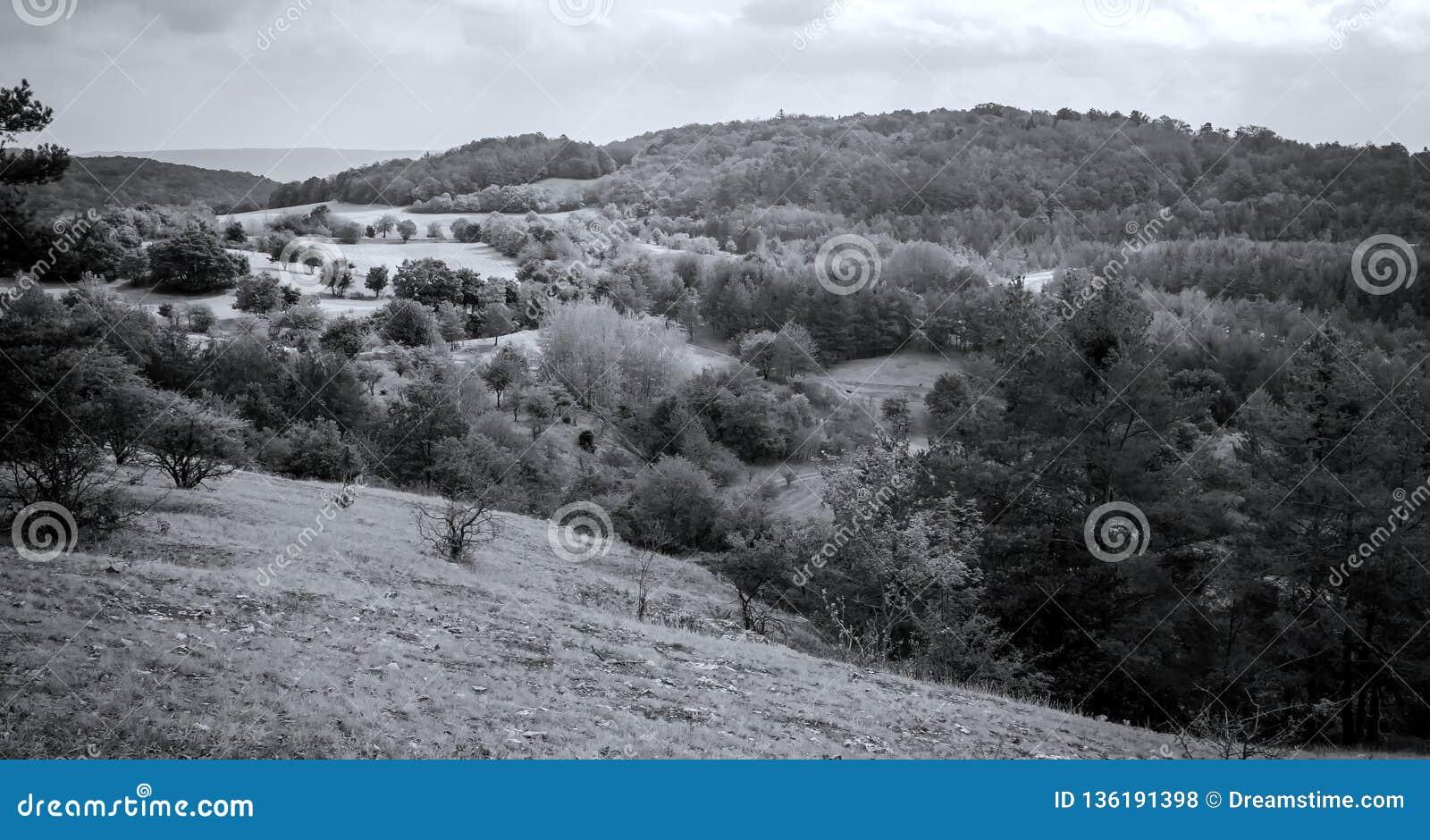 Panorama blanco y negro de la naturaleza