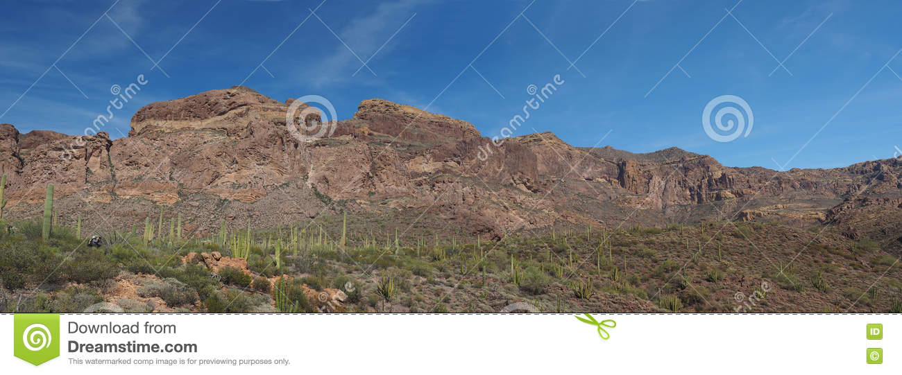 Panorama of Cactus and Volcanic Mountains in Organ Pipe Cactus N
