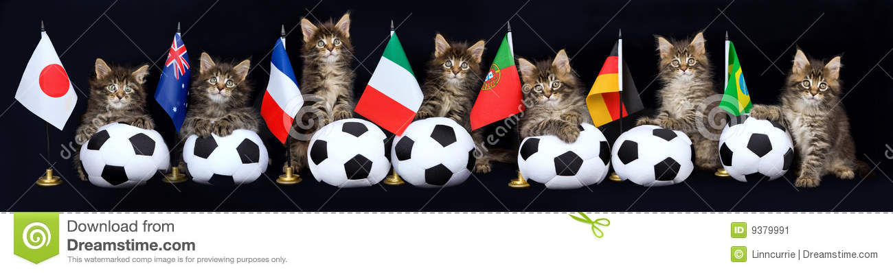 Panorama collage of kitten with soccer balls