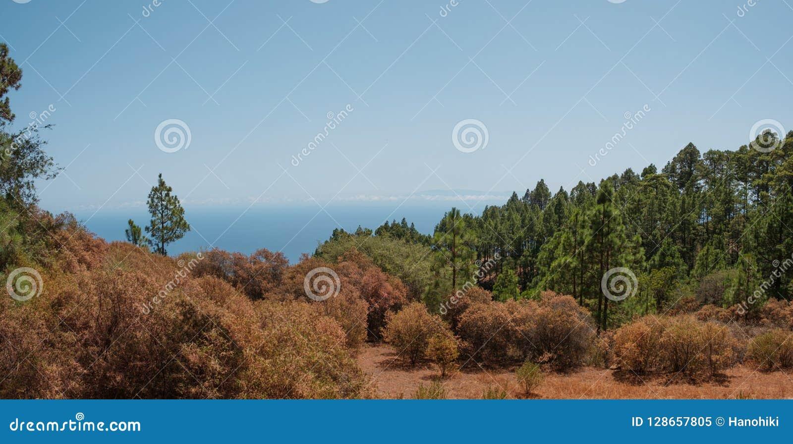 Panorama coloré de paysage de forêt d automne, l espace de copie de ciel bleu