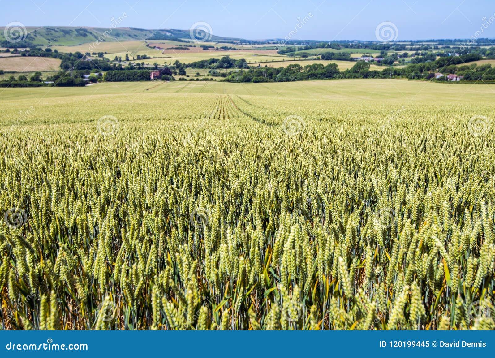 Panorama d Eaast le Sussex, Angleterre Vue vers la balise de Firle