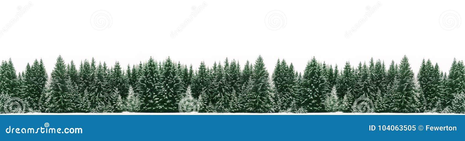 Panorama da floresta spruce da árvore coberta pela neve fresca durante o tempo do Natal do inverno