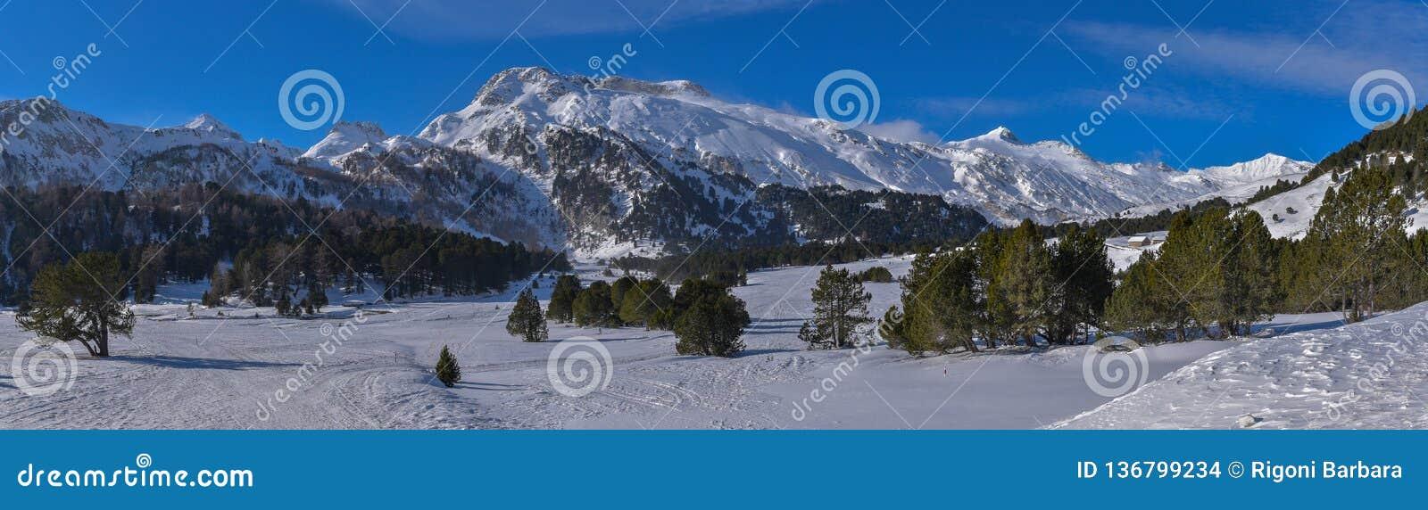 Panorama da montanha alta no inverno com neve, pinheiros e o céu azul