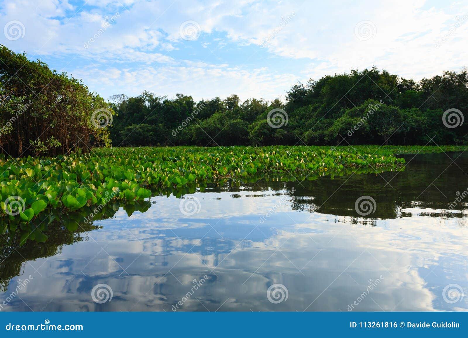 Panorama Da Pantanal, Regione Brasiliana Della Zona Umida ...