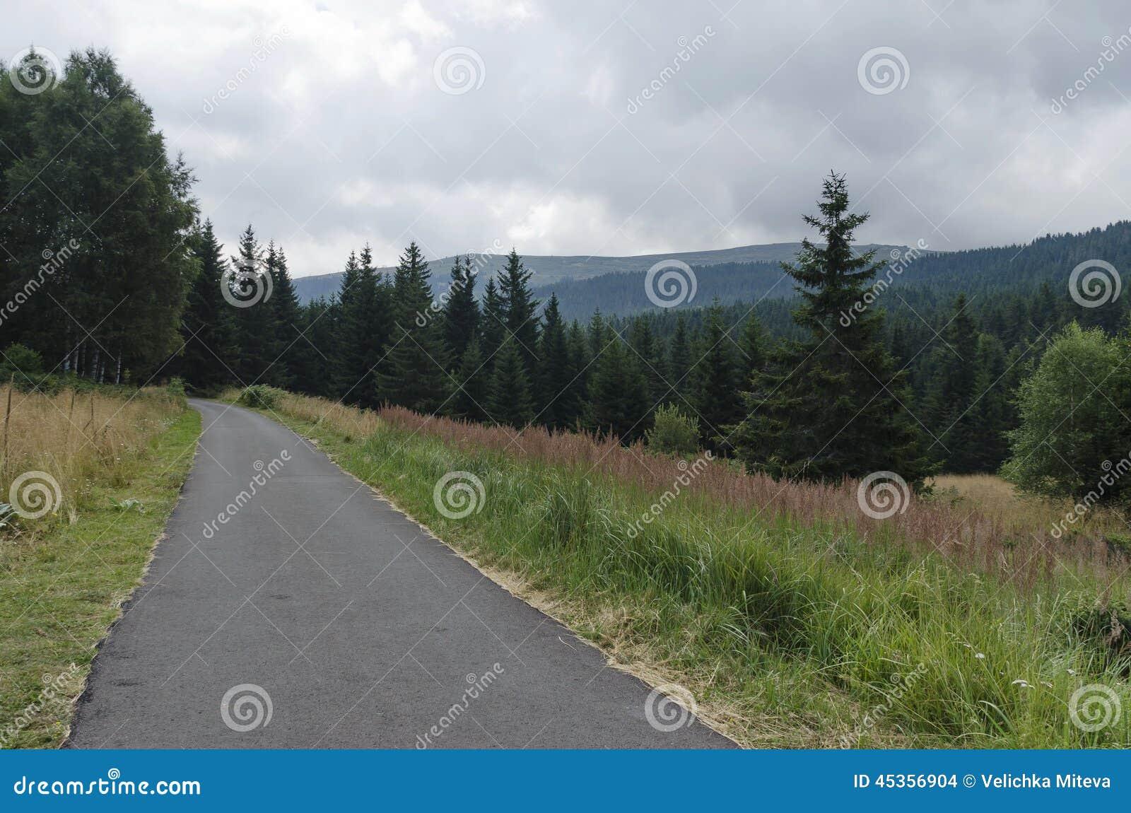 Panorama de forêt pittoresque avec la route et la clairière, montagne de Vitosha